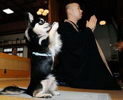 cachorro meditação zen_opt